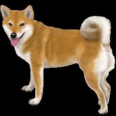 [LINEスタンプ] さすが!柴犬(よく使う言葉編) (1)