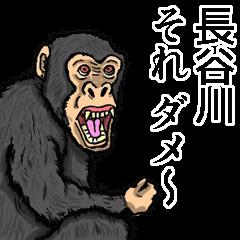 [LINEスタンプ] 長谷川さんスタンプ