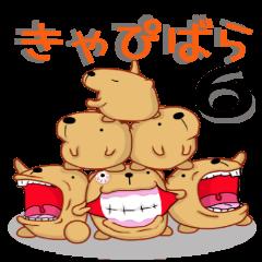 きゃぴばら6