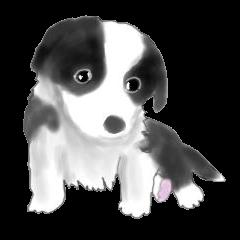 ボーダーコリーのオフ会&子犬