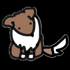 Lovely Shetlandsheepdog