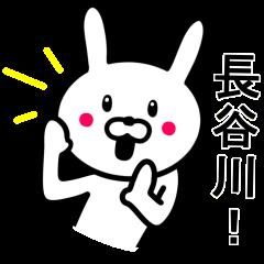 長谷川さんに使えるウサギ