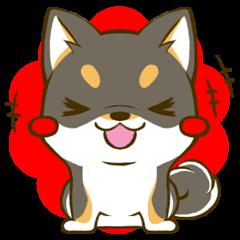 黒しばたん 3 黒柴犬 日本犬