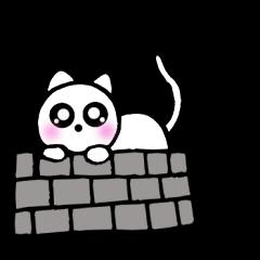 可愛い白猫 シロちゃん1 時々敬語