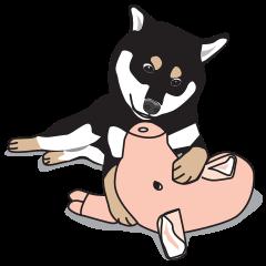 柴犬アキラ