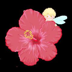 大人の『花で励まし&癒し』