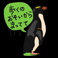 クールでニヒルなあいつはイワトビペンギン