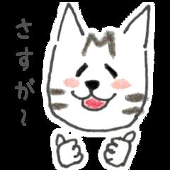 キジトラ猫マメ助