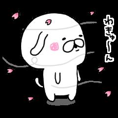 ■◇■白い犬のきゅんたん■◇■