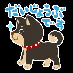ごきげん柴犬's