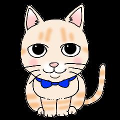 クリームトラの猫「麦」