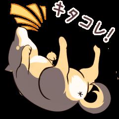 おたシバ ~黒柴犬の日常会話編~
